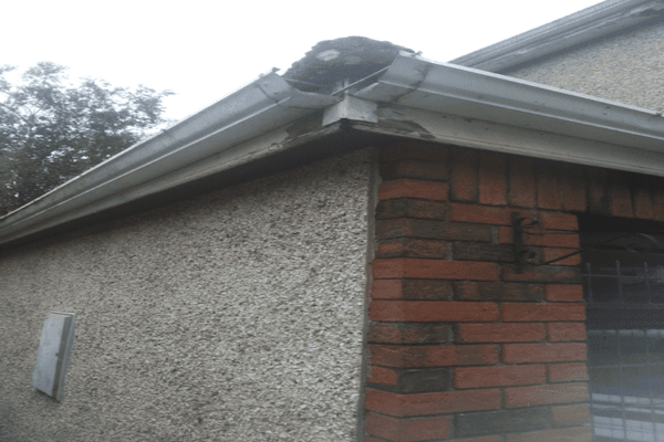 Gutter-Replacement-in-Dublin